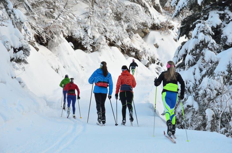 Беговые лыжи в снежном лесе стоковая фотография rf