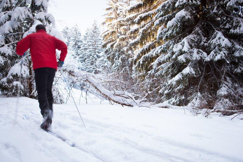 Беговые лыжи молодого человека на симпатичный зимний день стоковое изображение rf