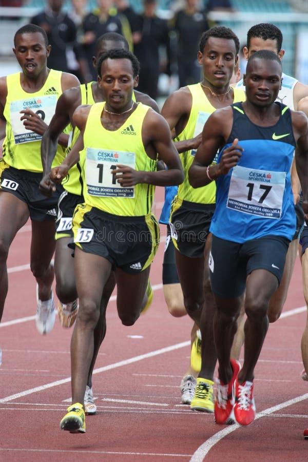 бегунки гонки 1500 метров стоковые изображения rf