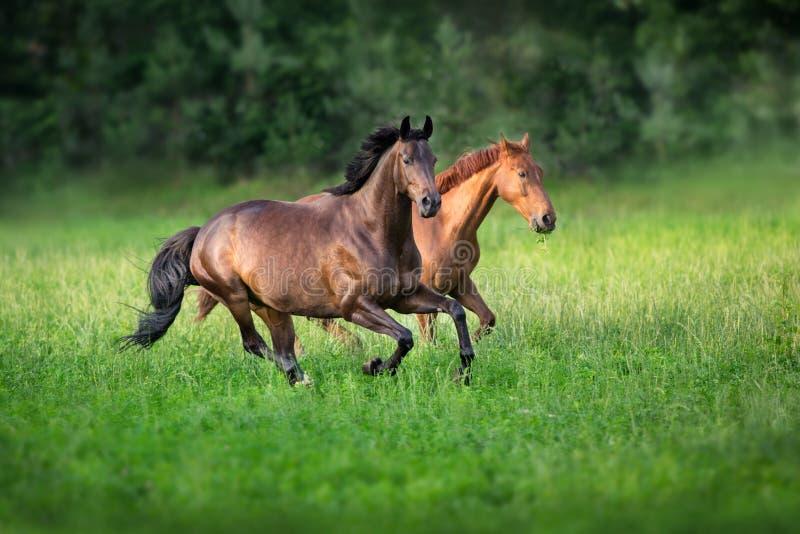 Бег 2 лошадей стоковое изображение