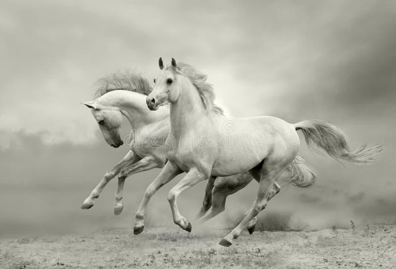 бег лошадей стоковые изображения