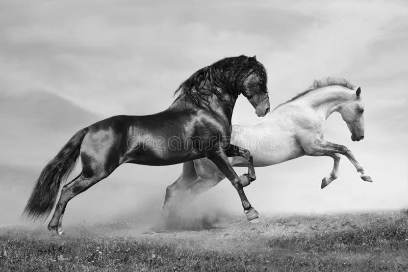 бег лошадей стоковое фото