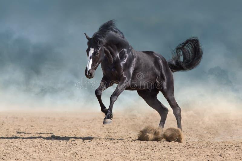 Бег лошади в пыли стоковое фото rf