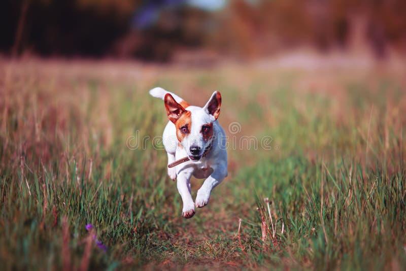 Бег собаки на открытом воздухе стоковое изображение rf