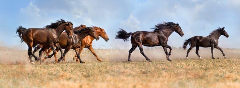 Бег табуна лошади стоковые фото