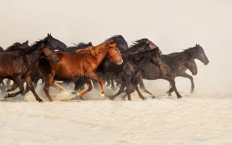 Бег табуна лошади стоковое изображение rf