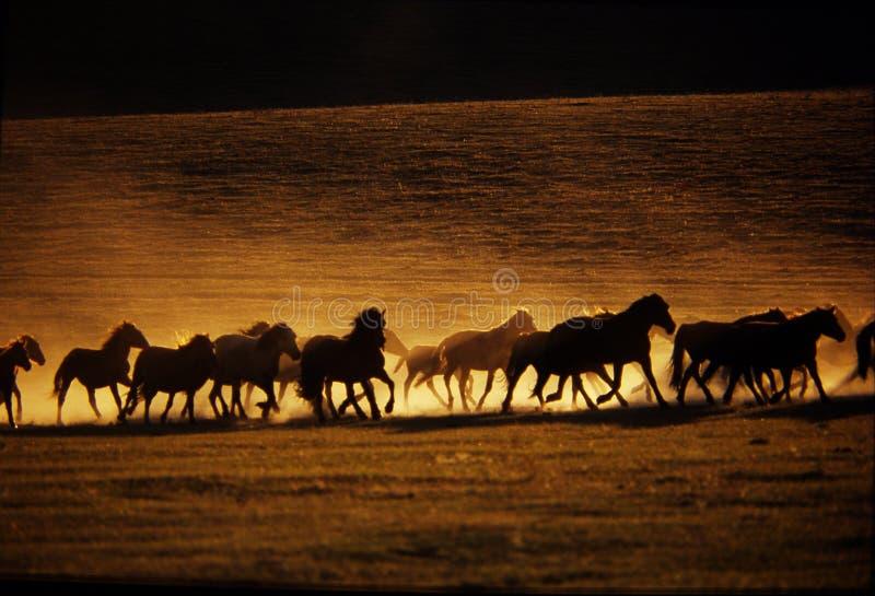 бежать лошадей
