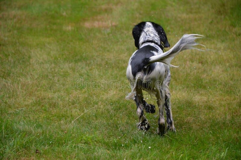 бежать фото движения собаки влажный стоковые изображения rf