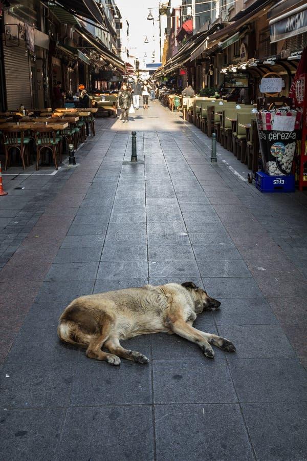 Бездомная собака спать и имея ворсину в середине пешеходной улицы азиатского района Kadikoy, в Стамбуле стоковая фотография rf