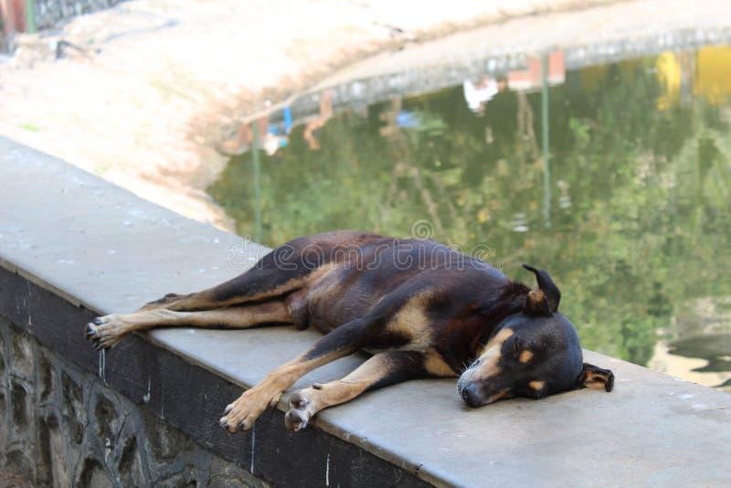 Бездомная собака спать мирно в парке стоковые изображения