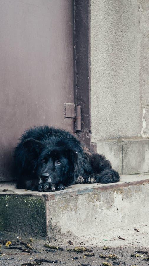 Бездомная черная собака лежит около загородки стоковые изображения