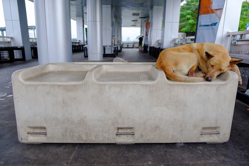 Бездомные собаки имеют раны ноги стоковое фото rf