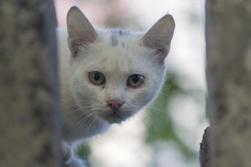 Бездомный белый кот смотрит из прятать стоковое фото