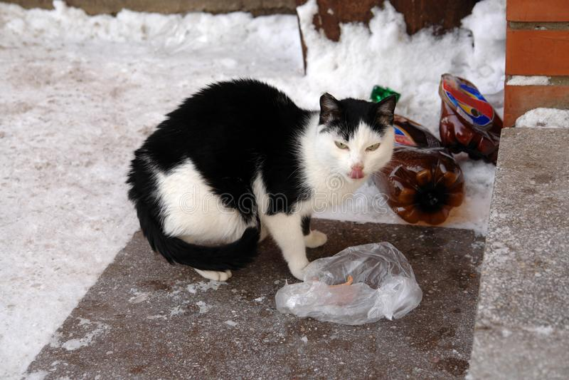 Бездомный голодный грустный кот на улице города около лестниц Фото бездомного животного стоковое фото