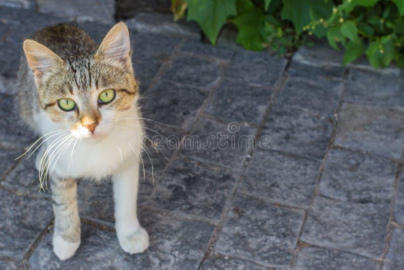 Бездомный кот с зелеными глазами стоковое фото rf