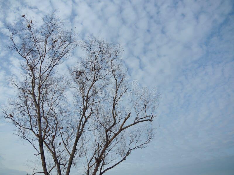 Безлистные деревья предпосылка голубое небо, показывая начало зимы стоковое фото rf
