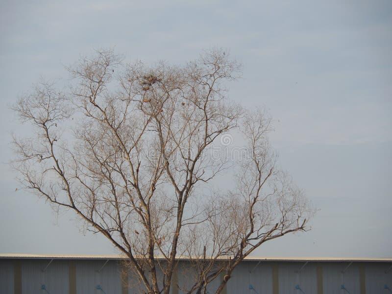 Безлистные деревья предпосылка голубое небо, показывая начало зимы стоковые изображения rf