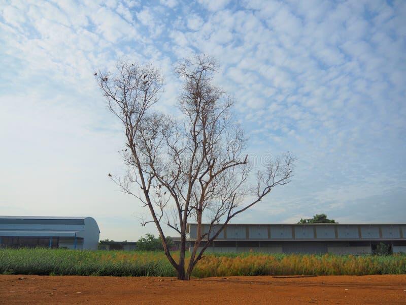 Безлистные деревья предпосылка голубое небо, показывая начало зимы стоковые изображения