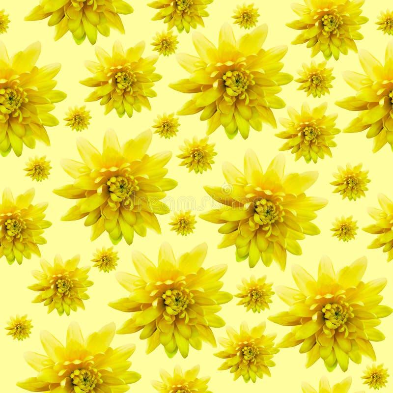 Безшовная бесконечная желтая флористическая предпосылка для дизайна и печатания Предпосылка естественных хризантем стоковые изображения