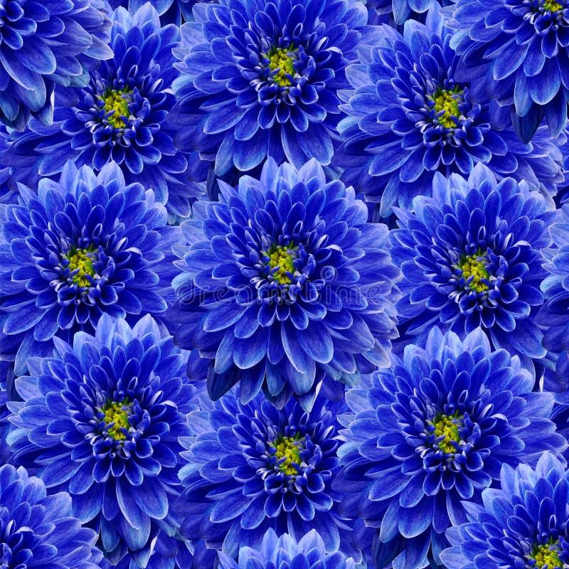 Безшовная бесконечная флористическая предпосылка для дизайна и печатания Предпосылка естественных голубых хризантем стоковые изображения rf