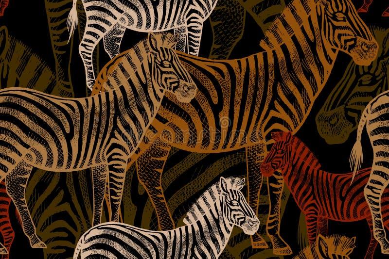 Безшовная картина вектора с африканской зеброй иллюстрация вектора
