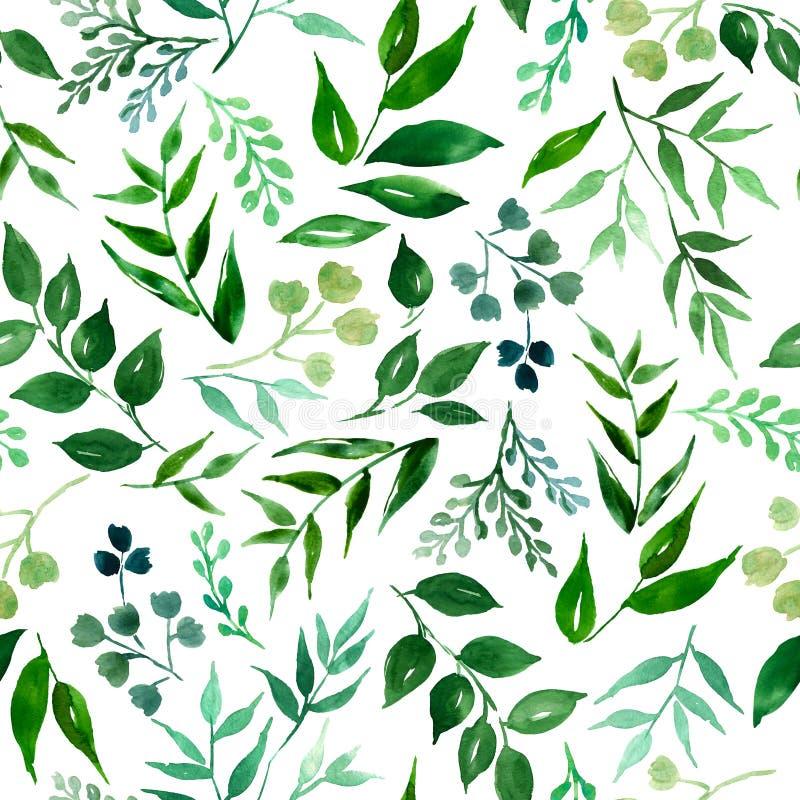 Безшовная картина зеленых листьев, трав, акварели руки тропического завода вычерченной Предпосылка свежего eco красоты деревенско иллюстрация штока