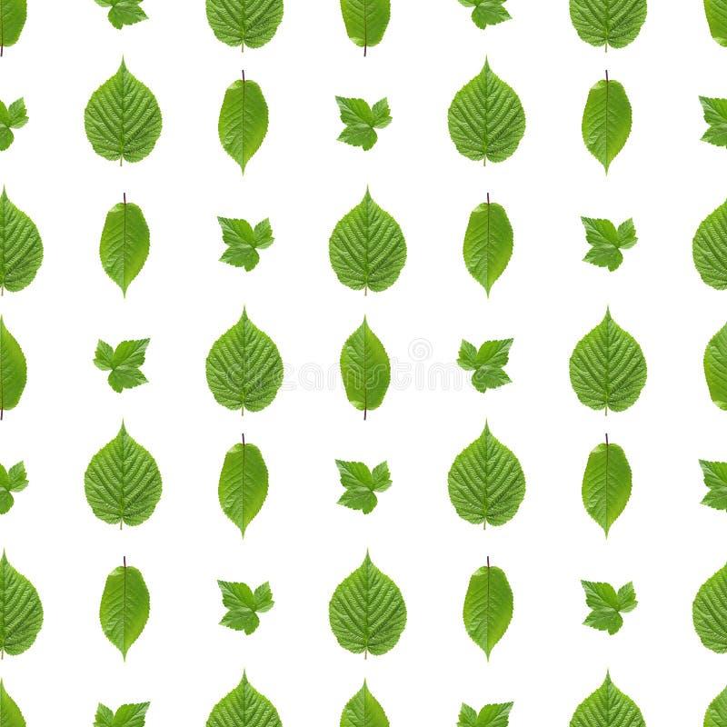 Безшовная картина зеленых листьев стоковые фото
