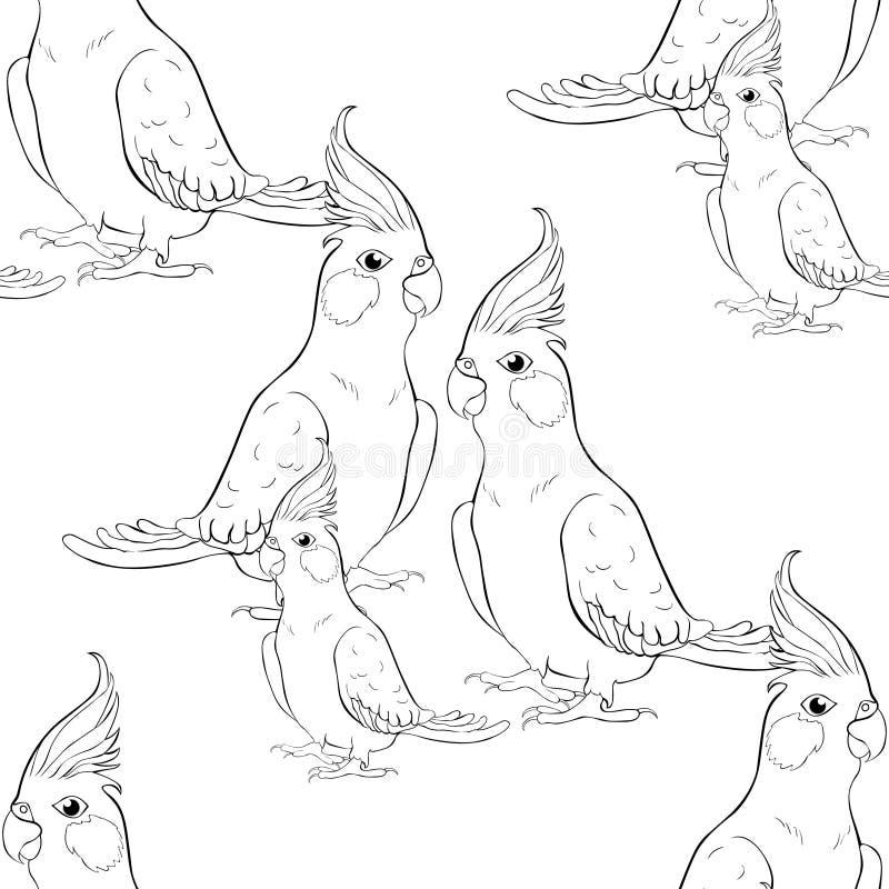 Безшовная картина крася семью какаду попугая нимфы Corella бесплатная иллюстрация
