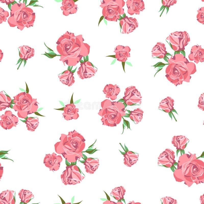 Безшовная картина на белой предпосылке поднимающее вверх близких цветков красотки естественное розовое розовое стоковые изображения