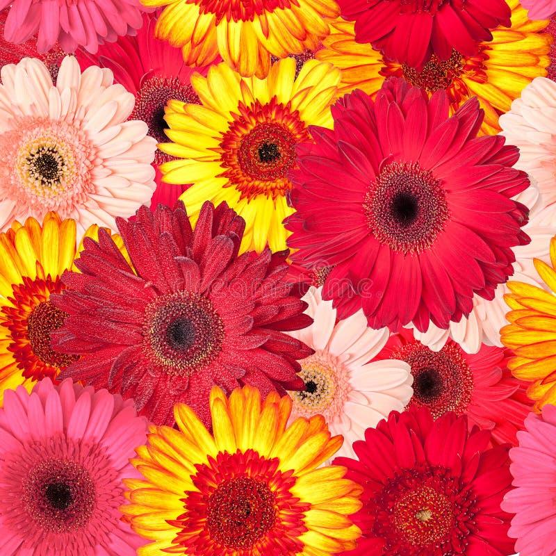 Безшовная картина от живых цветков Gerbera стоковые фото