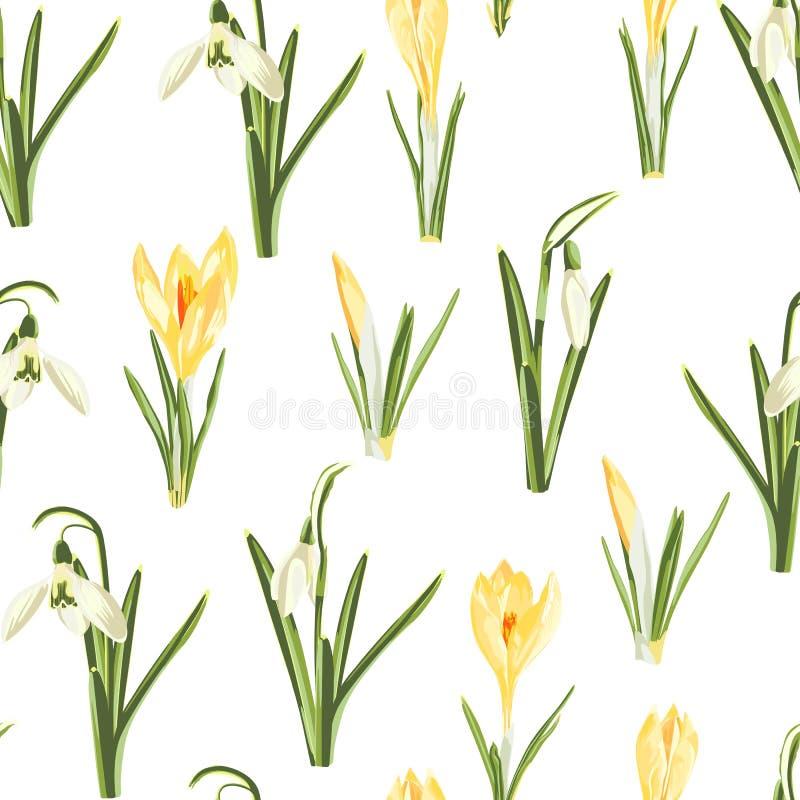 Безшовная картина с белым snowdrop и желтые листья цветка крокуса и зеленых на белой предпосылке иллюстрация штока