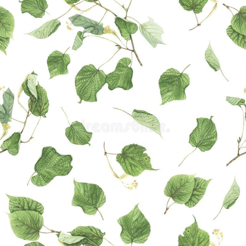 Безшовная картина с ветвями и листьями липы, картины акварели стоковая фотография rf
