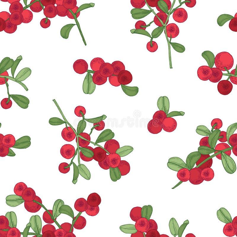 Безшовная картина с ледовитым lingonberry на белой предпосылке Фон с partridgeberry или cowberry вычерченная рука бесплатная иллюстрация