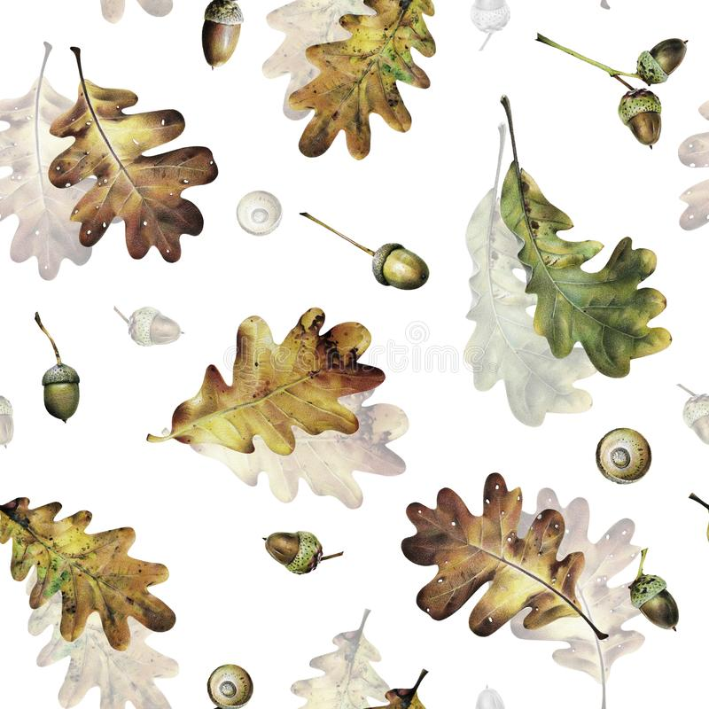 Безшовная картина с листьями осени дуба и жолудей Иллюстрация нарисованная рукой с покрашенными карандашами бесплатная иллюстрация
