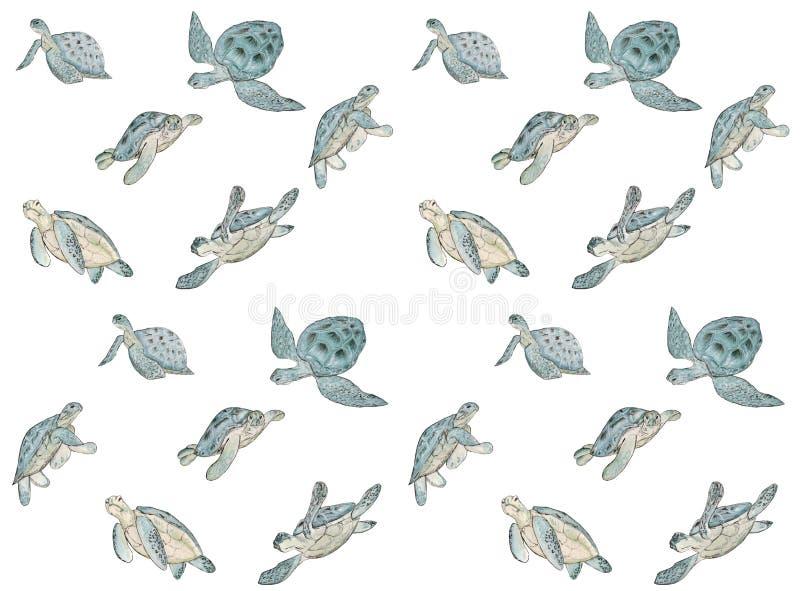 Безшовная картина с морской черепахой акварели на белой предпосылке Печать лета экзотическая бесплатная иллюстрация