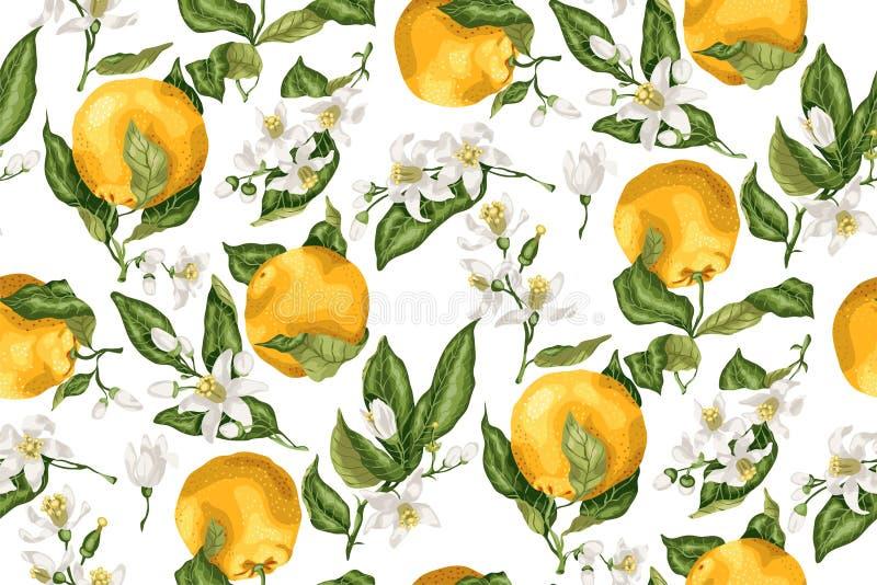 Безшовная картина с оранжевым фруктовым дерев деревом разветвляет, плодоовощи и flo иллюстрация вектора