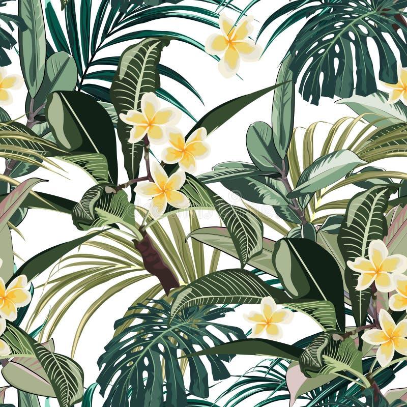 Безшовная картина с тропическими листьями и цветками plumeria рая Темное и яркое ое-зелен monstera ладони выходит на белое backg иллюстрация штока