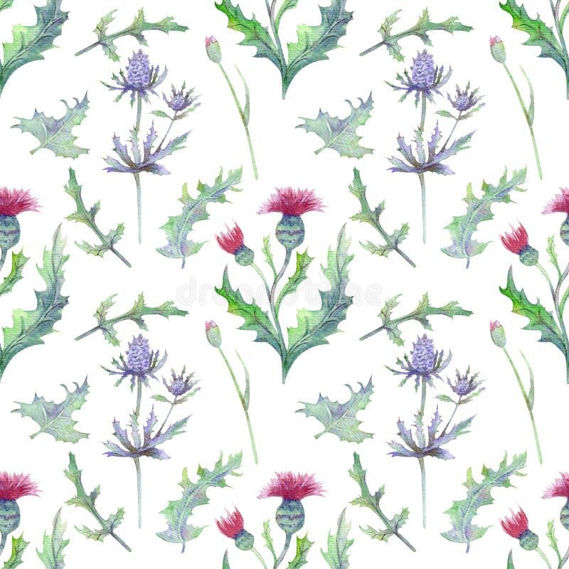 Безшовная картина с цветками и листьями весны Wildflowers на изолированной белой предпосылке Цветочный узор для обоев или ткани иллюстрация штока