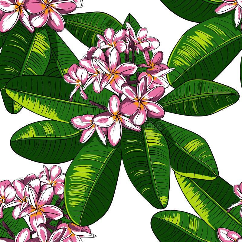 Безшовная картина с цветками и Frangipani plumeria иллюстрация штока