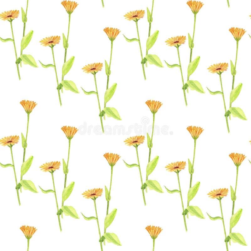 Безшовная картина с цветками чертежа акварели стоковое фото rf