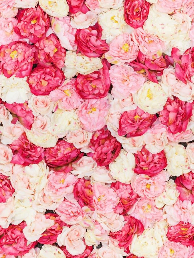 Безшовная картина с цветками стоковая фотография rf