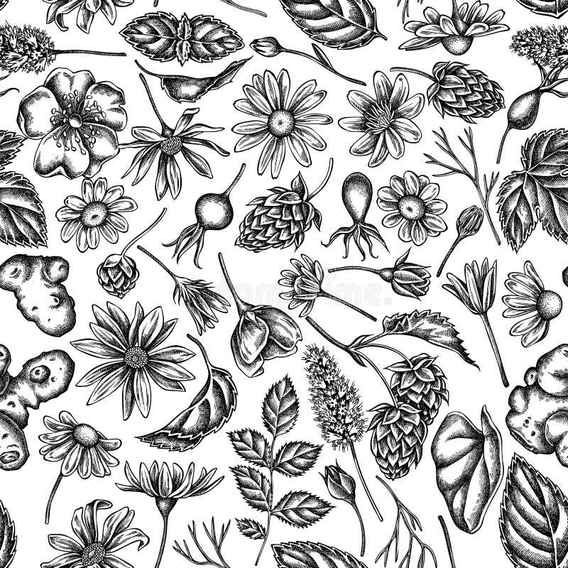 Безшовная картина с черно-белым celandine, стоцветом, розой собаки, хмелем, артишоком Иерусалима, пиперментом бесплатная иллюстрация