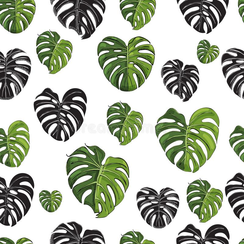 Безшовная картина с черным силуэтом и покрашенными листьями monstera изолированными на белой предпосылке Эскиз чернил руки вычерч иллюстрация вектора
