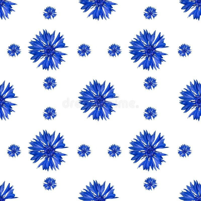 Безшовная картина цветков cornflower на белой предпосылке стоковые изображения