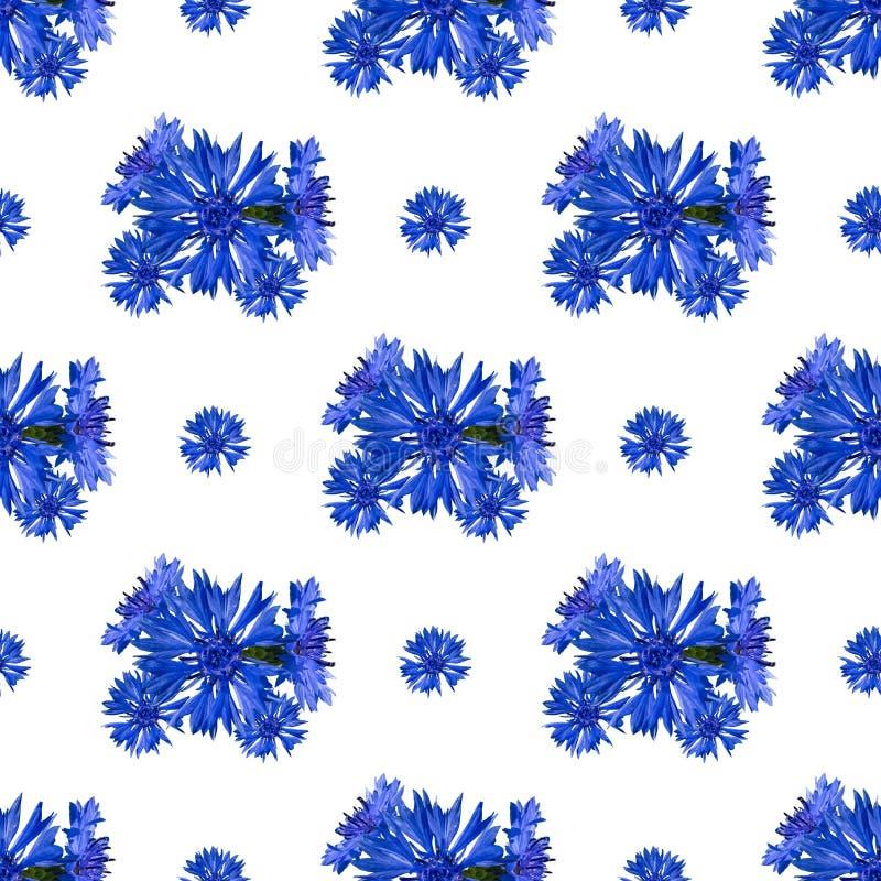 Безшовная картина цветков cornflower на белой предпосылке стоковое фото rf