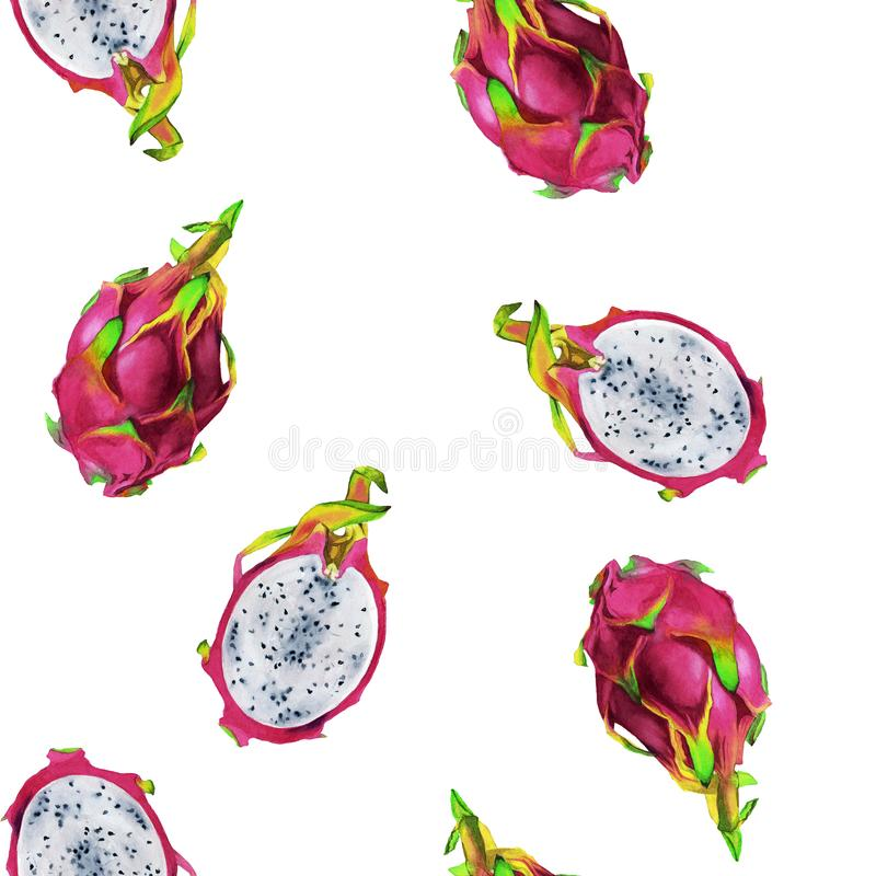 Безшовная картина illustartion акварели magenta pitaya иллюстрация вектора