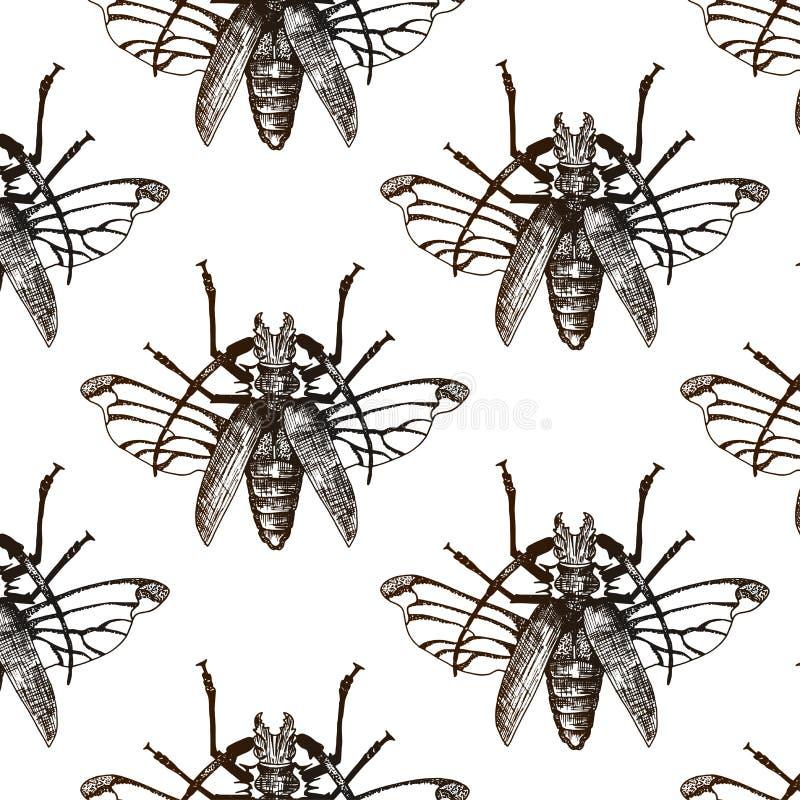 Безшовная предпосылка вектора с насекомым руки вычерченным иллюстрация вектора