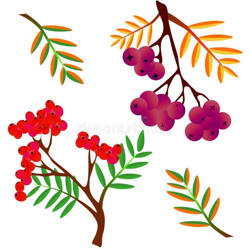 Безшовная предпосылка с рябиной акварели зол-ягоды иллюстрация вектора