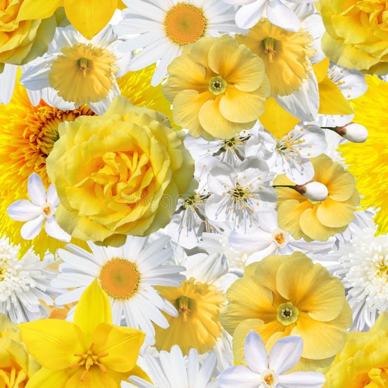 Безшовная предпосылка с желтыми и белыми цветками стоковая фотография rf