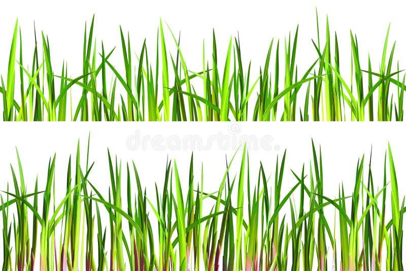 Безшовная текстура травы на белизне стоковые фото
